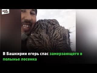 В Башкирии егерь спас замерзающего в полынье лосенка
