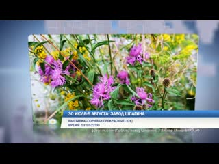 Выходные в Перми: выставка сорняков и фестиваль бодипозитива