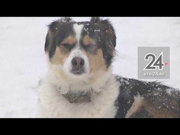 Почти 140 человек покусали собаки в Нижнекамске