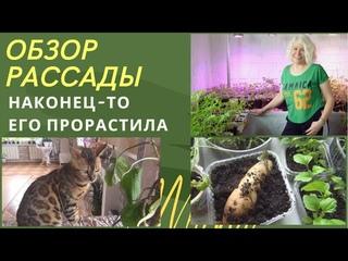 🔴Обзор  рассады🔴Как легко размножить лилии🔴Эпопея с бататом🔴Способ как нарастить корни у томатов🔴
