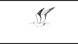 Черновая анимация - чайка, полет и посадка