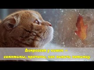 Депрессия у кошек — симптомы, причины, как помочь питомцу  Depression in cats