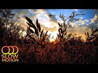 Весенний Закат, Звуки Сверчков, Пение Птиц, Звуки Природы для Здорового Сна и Отдыха