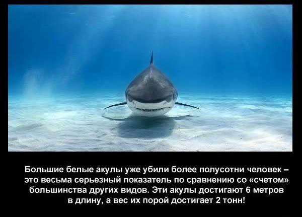 валтея - Интересные факты о акулах / Хищники морей.(Видео. Фото) Bu3SJv4Gok8