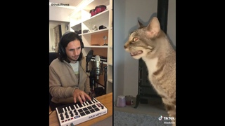 The Kiffness X Sneeze Cat - Blinding Sneeze (The Weeknd - Blinding Lights Cover)
