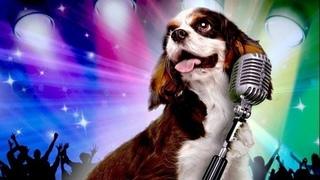 2016 ● Звездный щенок | Pup Star