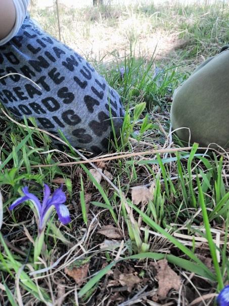 сновидение цветок кукушкино гнездо фото стараются жить