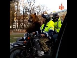 Слышали новость Медведь на мотоцикле