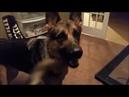 Реакция собак на сцену из мульфильма Зверополис