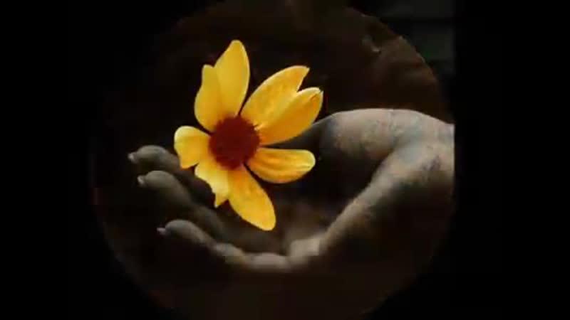 Лунный цветок Карлос Сантана