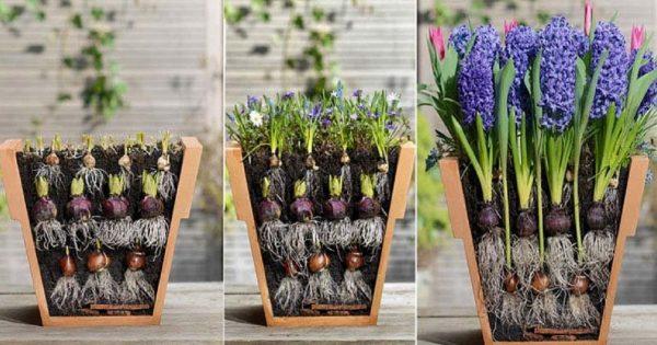 Как красиво посадить луковичные цветы | ВКонтакте