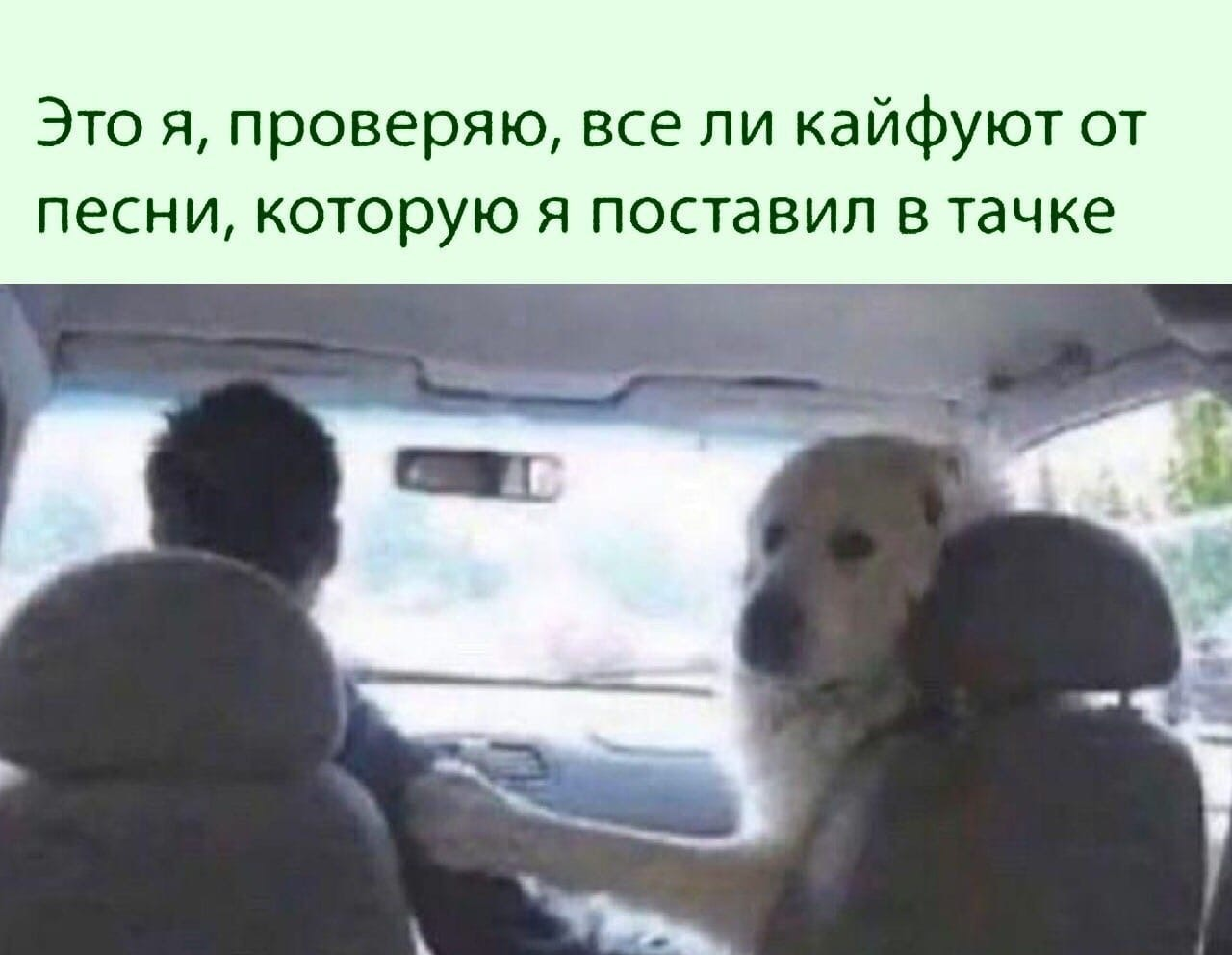 Кайф в машину ✌