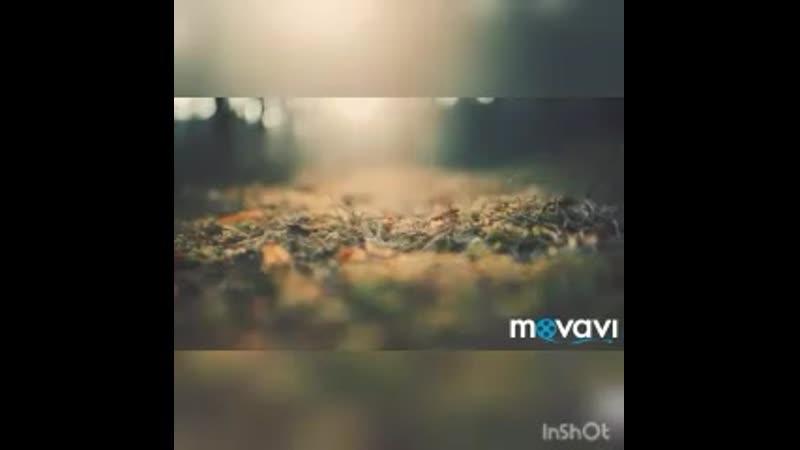 Песня Юрмала ( песня 1982 год участники 2005 года гимн Новой волны в Юрмале)