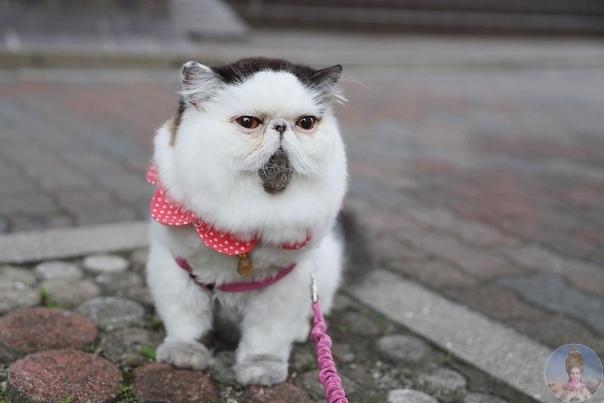 Zuu котейка, который выглядит так, как мы себя чувствуем в понедельник