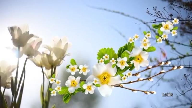 Вербное воскресенье Красивое поздравление