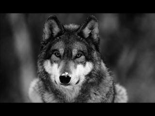 T1One - Волки (VIDEO 2021)