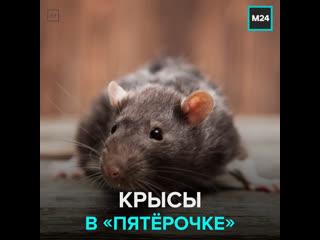 Крысы лазят по фруктам в магазине Пятёрочка  Москва 24