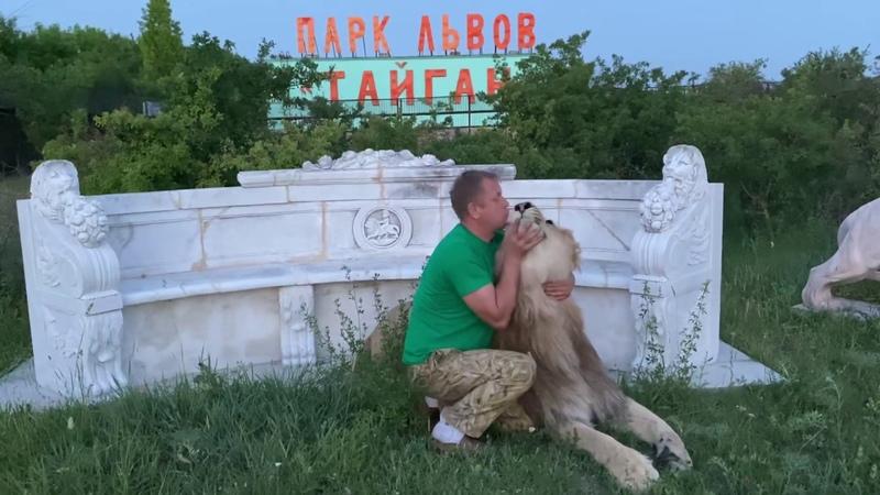 Султан МЫ БУДЕМ С ТОБОЙ ВОЖАКАМИ Человек успокаивает льва Russian Lion man
