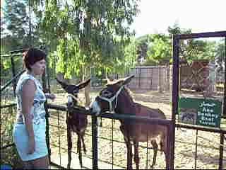 Тунис 2010, зоопарк г.Махдия