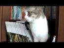 «Моя кошка Мася» под музыку Доминик Джокер - Если ты со мной (Paul Vine RMX).