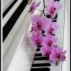 Фортепиано для детей и взрослых