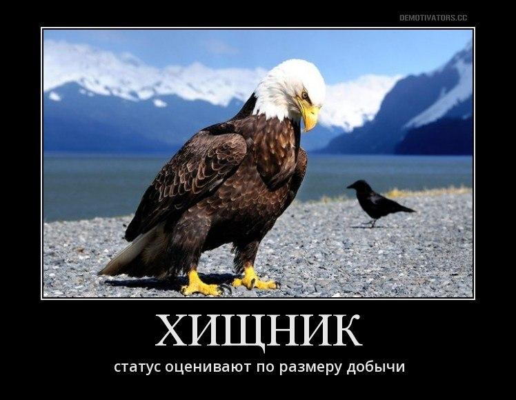 фото орла с демотиватор самой философии существования