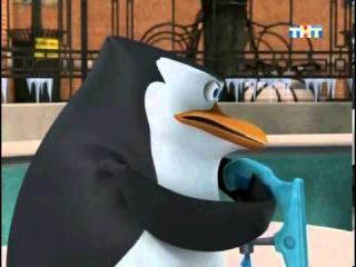 Пингвины из Мадагаскара. Прикол