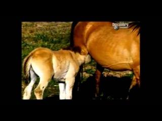 Сепарация  (отделение от матери) в мире животных