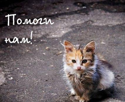 Картинки с надписью бездомные животные