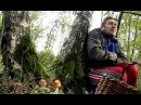 33 квадратных метра Хождение по лесу
