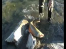 крутая рыбалка в сибири такую вы точно не видели