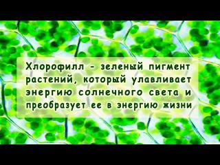 Жидкий Хлорофилл - Liqiud Chlorophyll NSP