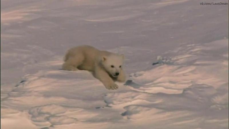 Замёрзшая планета Белый медведь