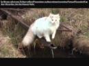 Warrior Cats Video Kinotrailer für offiziellen WaCa Wettbewerb