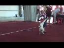 Першина Мария и Амадей Dog dance 13 06 15 CACIB ККУ WKU