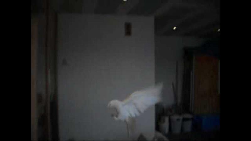 Igdirli Nizamettinin Taklaci Güvercinleri 9