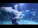 Шоу Кормление акул в Океанариуме ТРЦ РИО