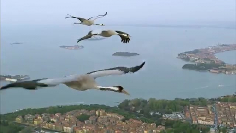 BBC Earthflight Winged Planet Common Cranes Fly Over Venice Narrated by David Tennant