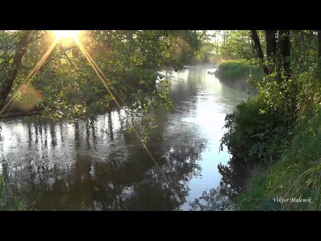 Река Природа Пение птиц Журчание воды Солнце в ветвях Релакс Медитация
