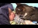 Дружба. Смешно про кошек и детей