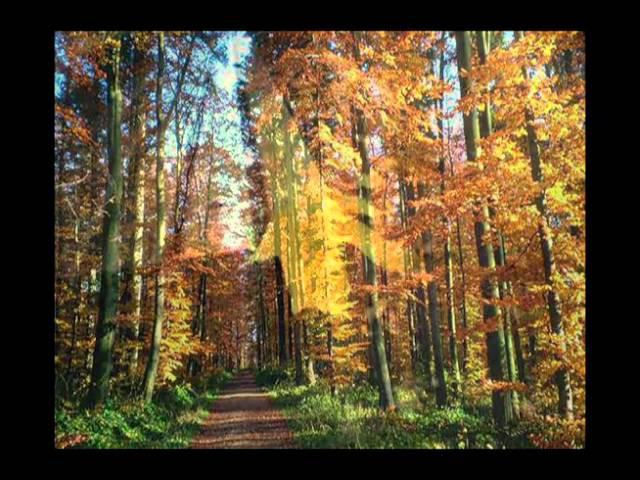 Ernesto Cortazar -Тhe autumn miracle of love