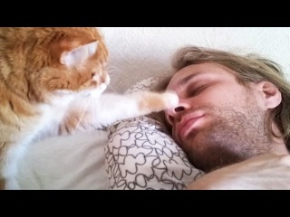 Cute Pets Waking Up Their Owners ⏰ Best Alarm Clock Ever! [Funny Pets]