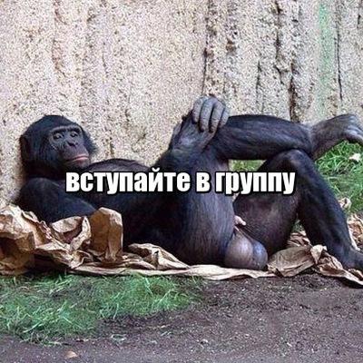 polezen-porno-prikoli-v-vkontakte-fut-fetish