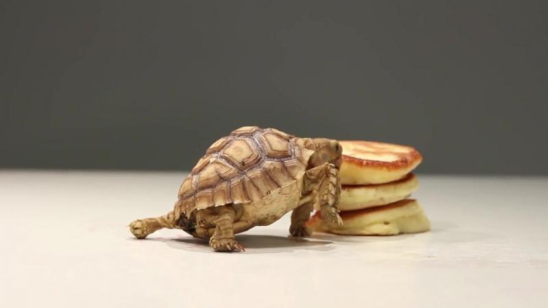 Гифка черепаха бежит