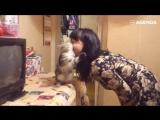 Котики любят обнимашки