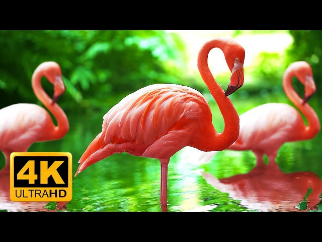 Breathtaking Colors of Nature in 4K 🌻🐦Birds Flowers Sleep Relax Meditation Music 2 hours UHD