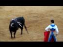 коррида бык кидает торреро