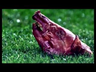 В этот день 15 лет назад фанаты «Барселоны» швырнули свиную голову в Луиша Фигу