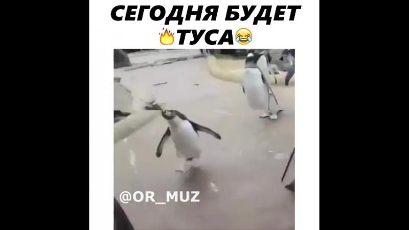гифка пингвин сегодня будет туса для