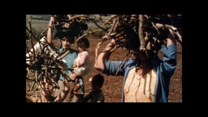 Tarumã | 1975 - Aloysio Raulino